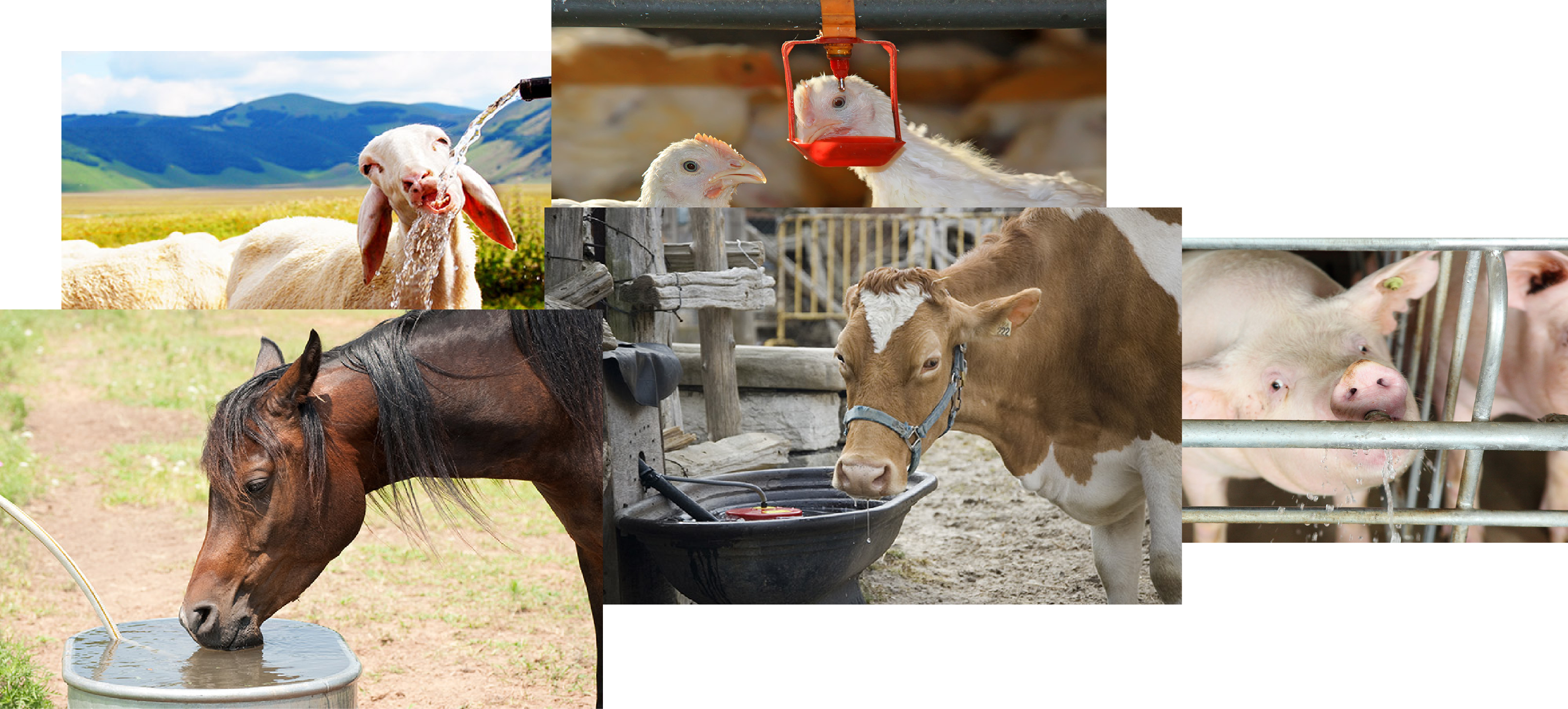 montage animaux de ferme